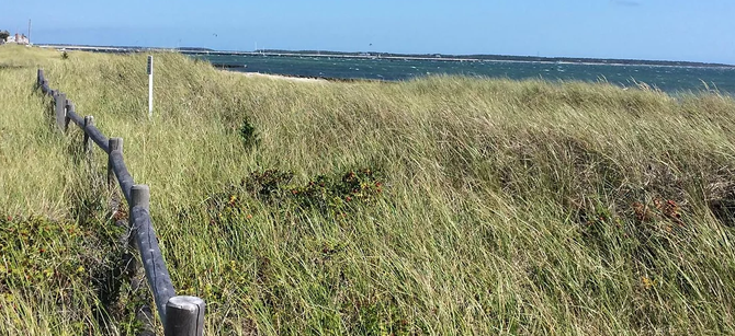 Seaside Field